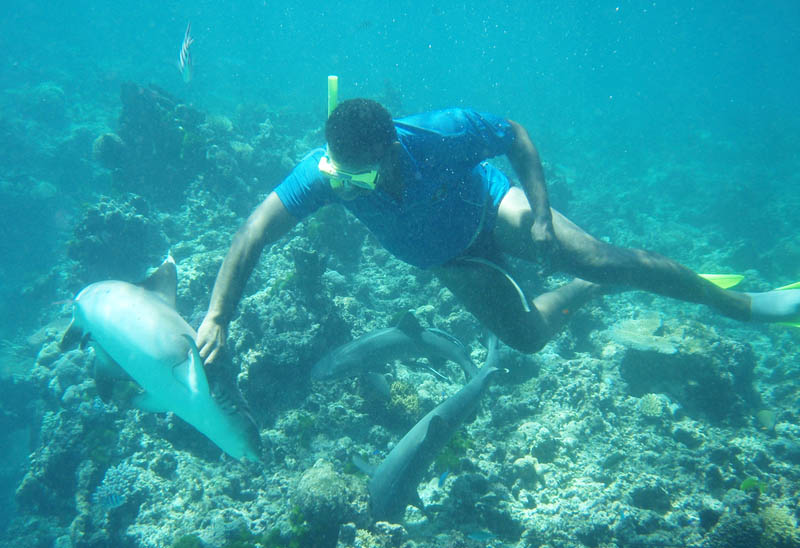 Shark-Snorkeling