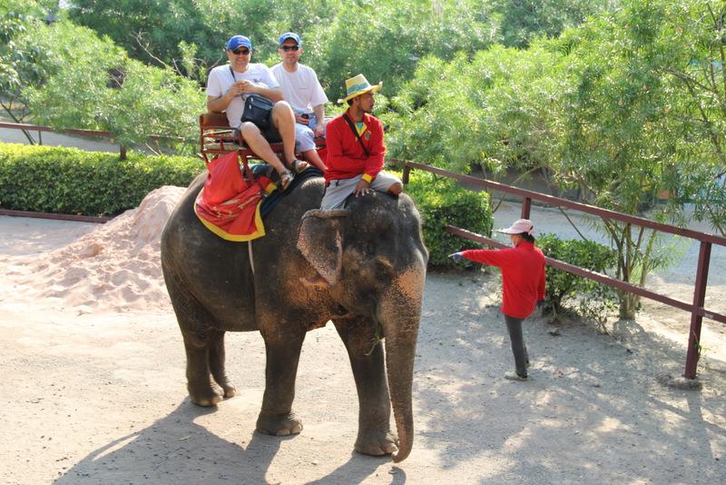 Pattaya Fil Safarisi