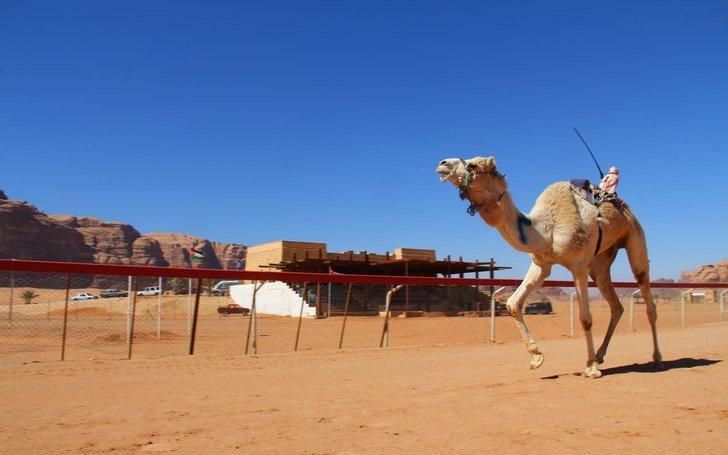 Deve Yarışları, Wadi Rum, Ürdün