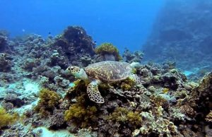 Diving-Aqaba–Jordan