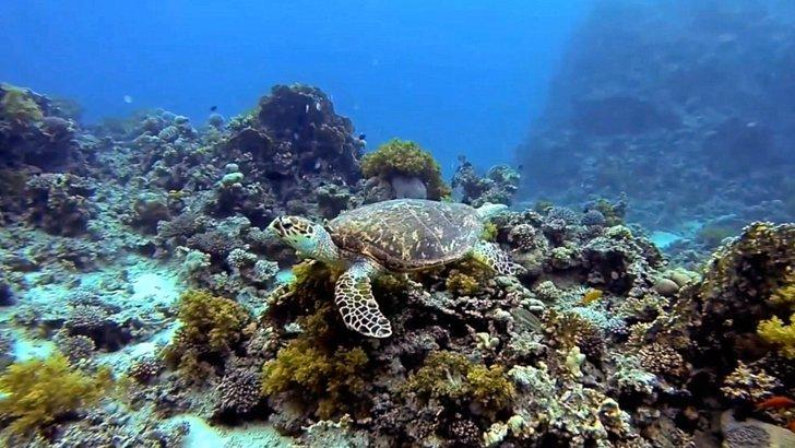 Diving, Aqaba, Jordan