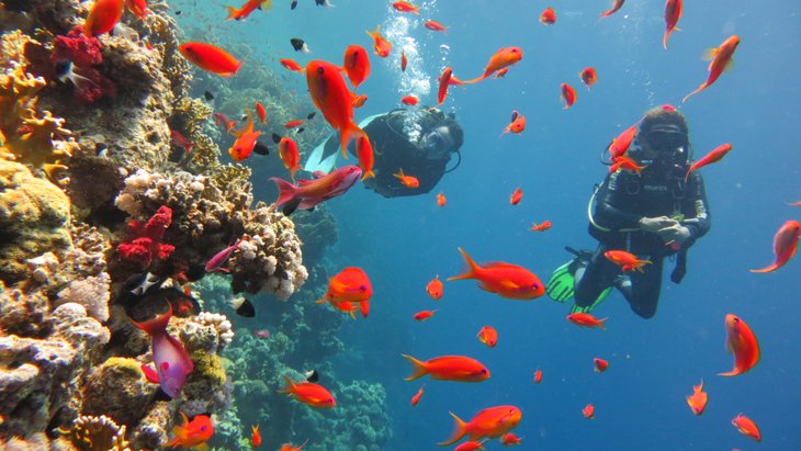 Jackson Reef, Ras Muhammed Milli Parkı, Şarm El Şeyh