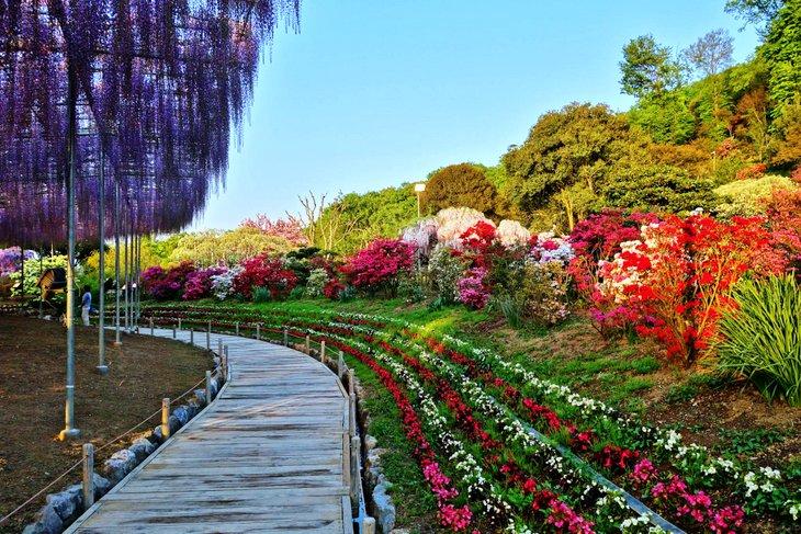 Ashikaga Çiçek Parkı