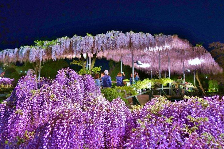 Japon Bahçeleri Fotosu