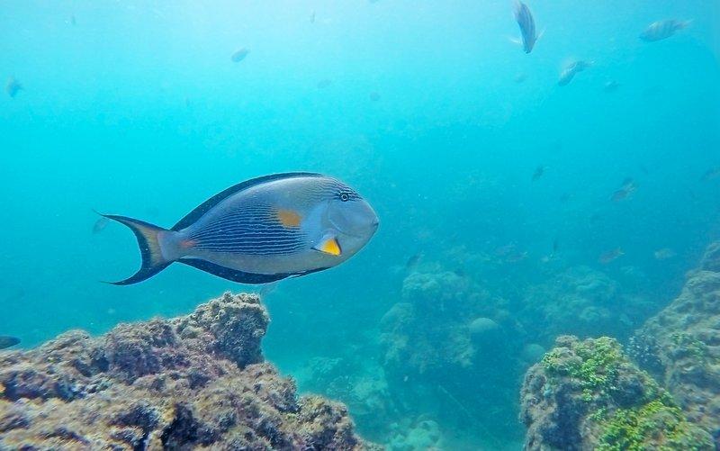 Kish Island Diving