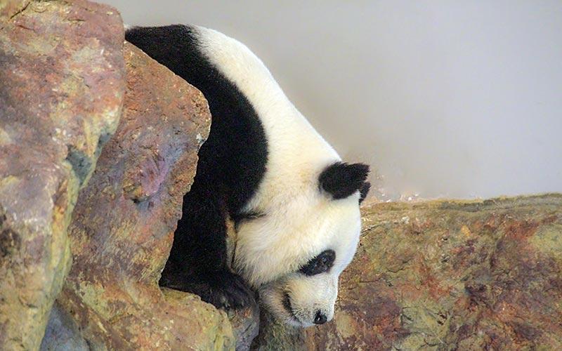 Adelaide Zoo, Australia