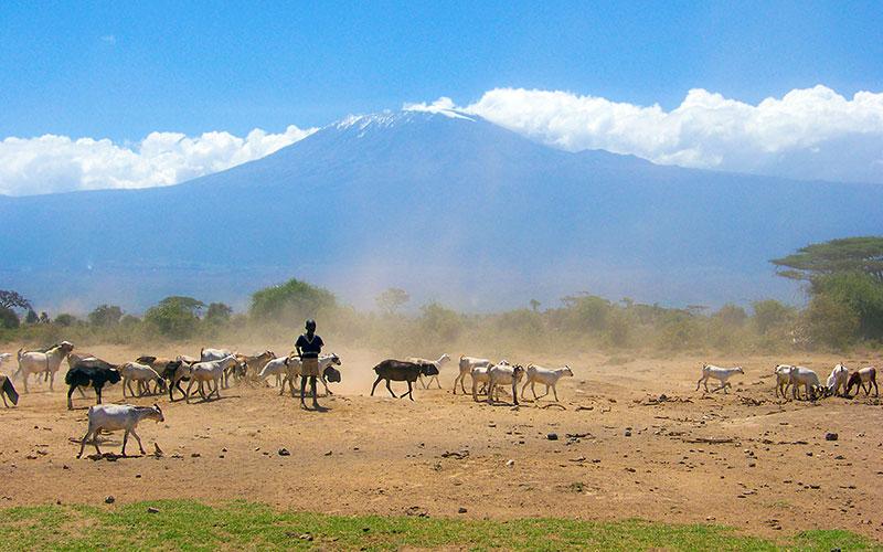 Kilimanjaro Milli Parkı, Tanzanya