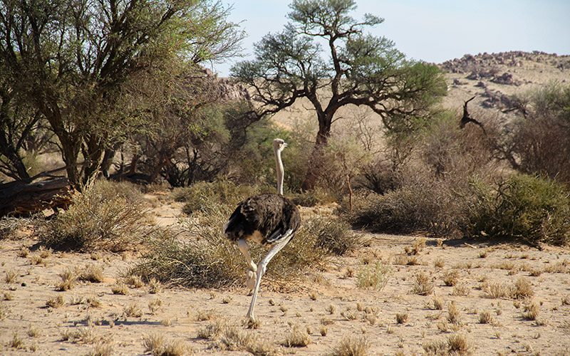 Namib Naukluft Ulusal Park