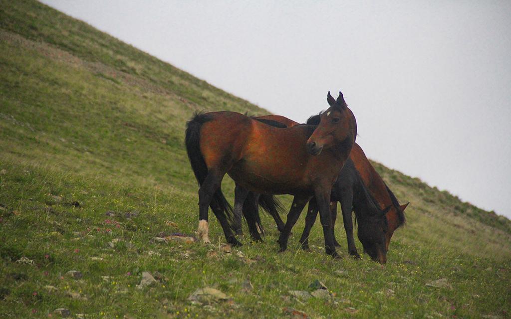 songkol kirgizistan