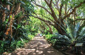 Cape Town Kirstenbosch