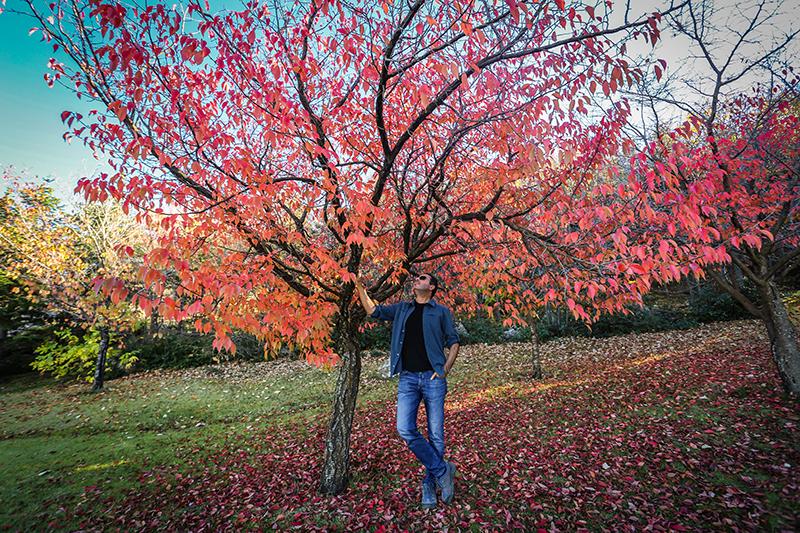 japon bahçesi kaman