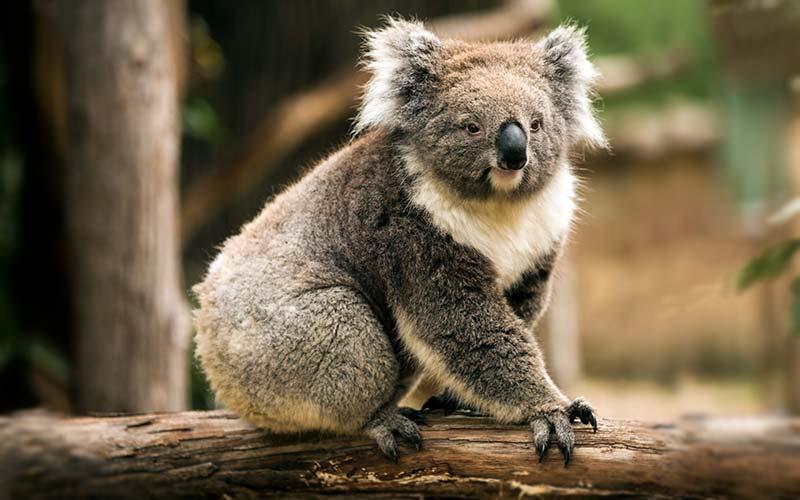 Cleland-Wildlife-Park-Adelaide