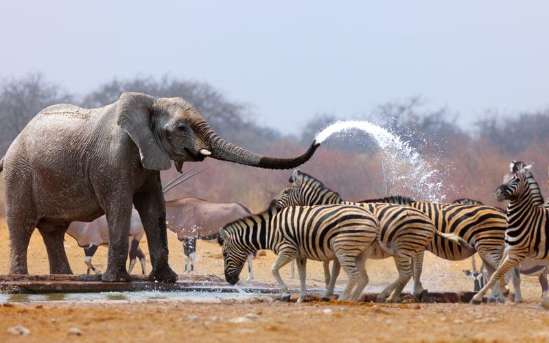Etosha Milli Parkı