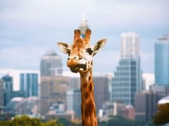 Taronga Hayvanat Bahçesi